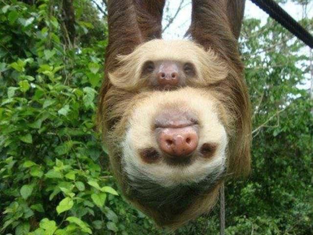 תמונות משמשעות של בעלי חיים