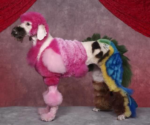 כלבים עם תספורות מיוחדות
