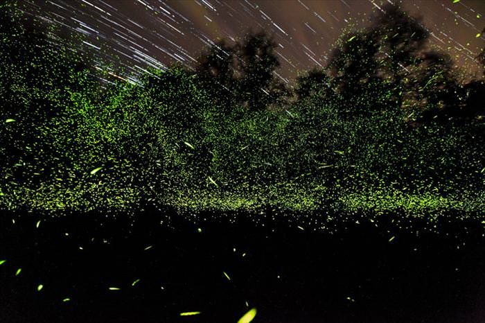 תמונות מדהימות של נשיונל ג'יאוגרפיק