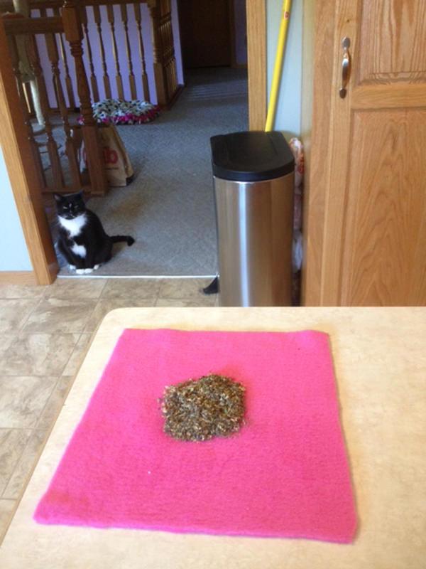 יצירה עם הילדים בחופש - לאוהבי חתולים בלבד