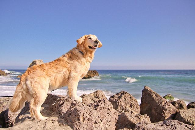 הכירו את הכלב השמח בעולם!