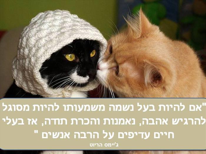 גלויות מכל הלב - ציטוטים נפלאים על בעלי חיים!