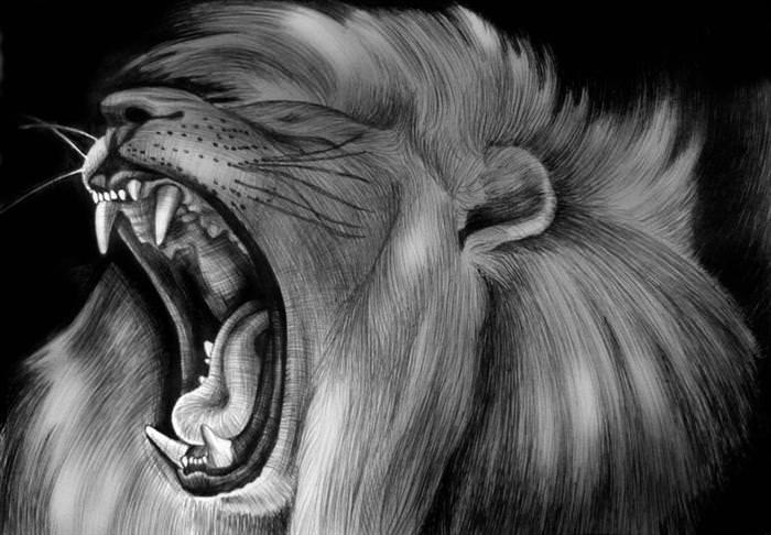 חיות הדיו - ציורים מדהימים בעט בלבד