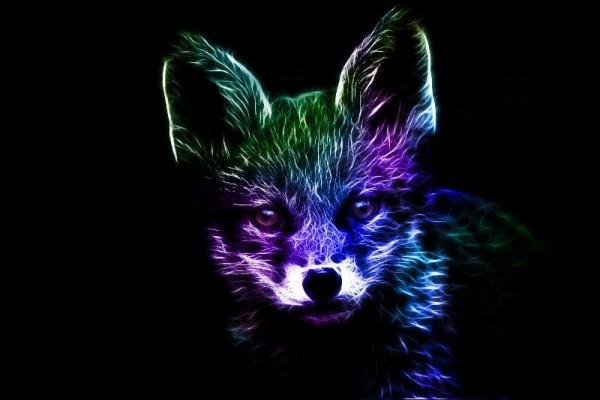 תמונות של חיות עם אפקטים מדהימים