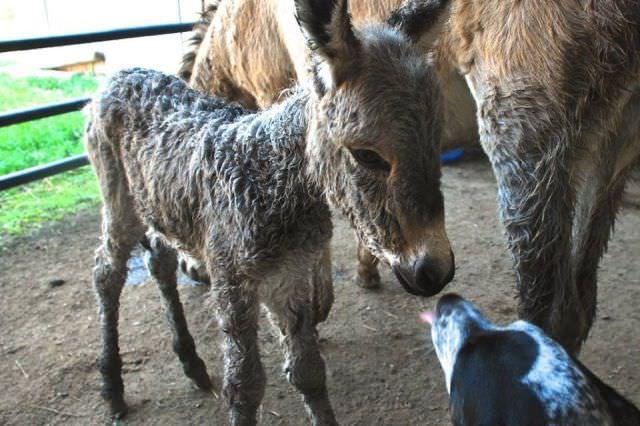 תמונות חמודות של בעלי חיים