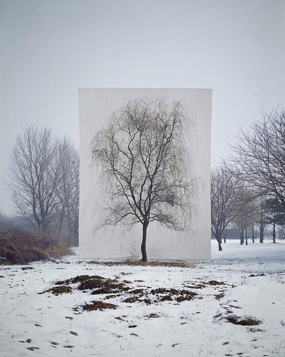 יצירות אמנות מהטבע
