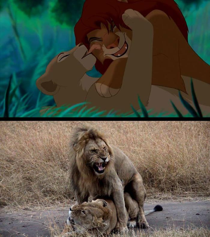תמונות ממלך האריות בספארי אמיתי
