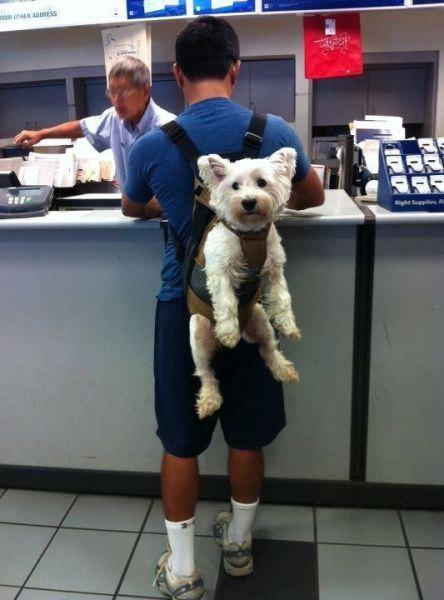 תמונות מרגשות של בני אדם וכלביםש