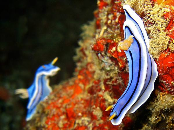 חלזונות ים