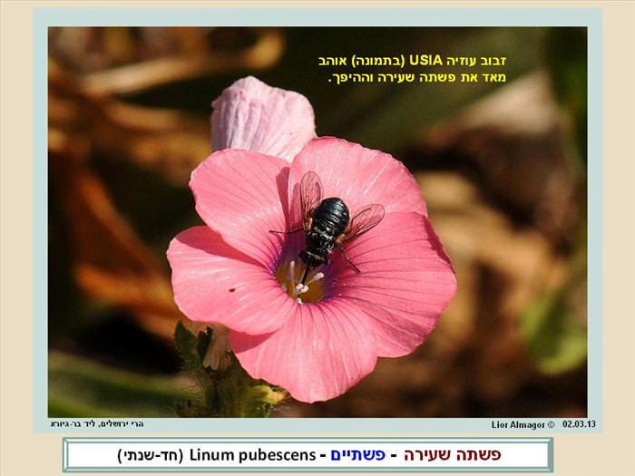 פרחי הבר בישראל