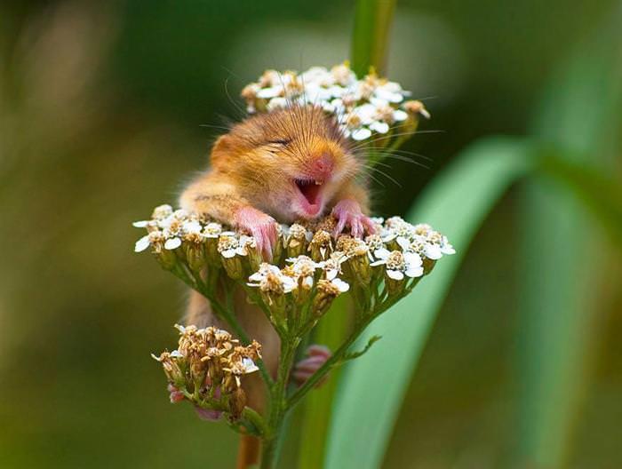 עכבר חמוד