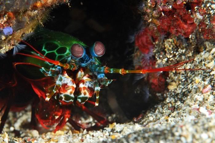 בעלי חיים צבעוניים