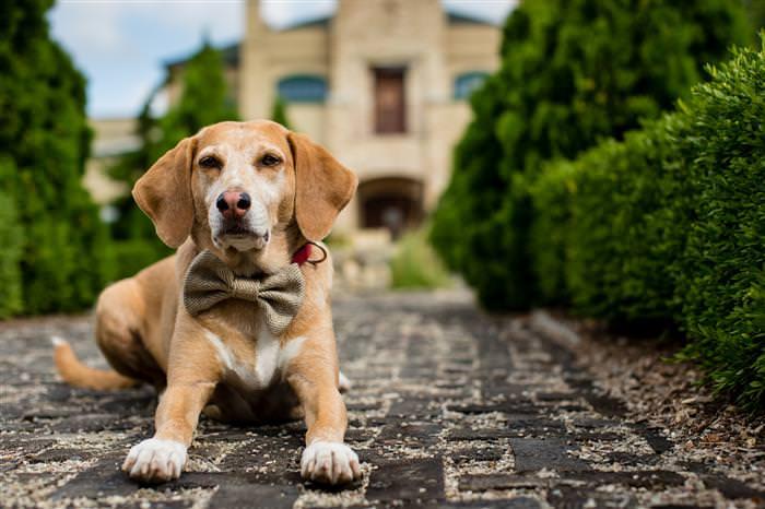 תמונות כלב זמני