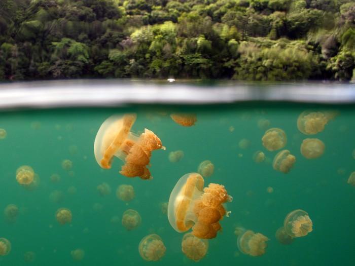 תמונות ים