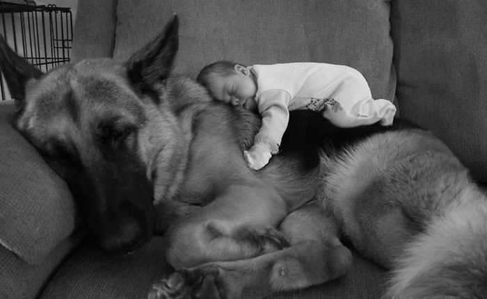כלבים ותינוקות