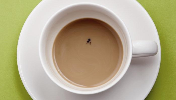 זבוב בקפה