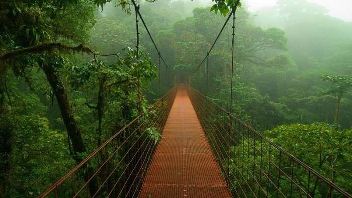 גשר ביער האמזונזס