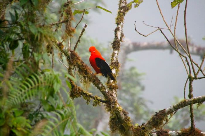 ציפור שיר צבעונית על עץ