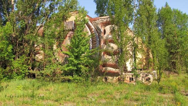 30 שנה אחרי אסון הגרעין של צ'רנוביל, הטבע מתחיל להשתלט על המקום
