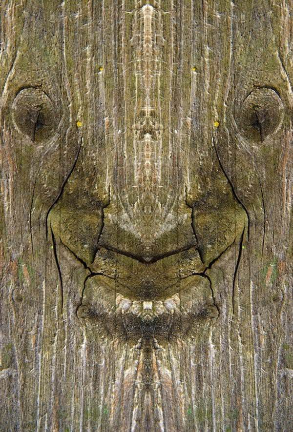 הצלמת המוכשרת הזו מצאה דרך יצירתית כיצד להסתכל לעצים בעיניים