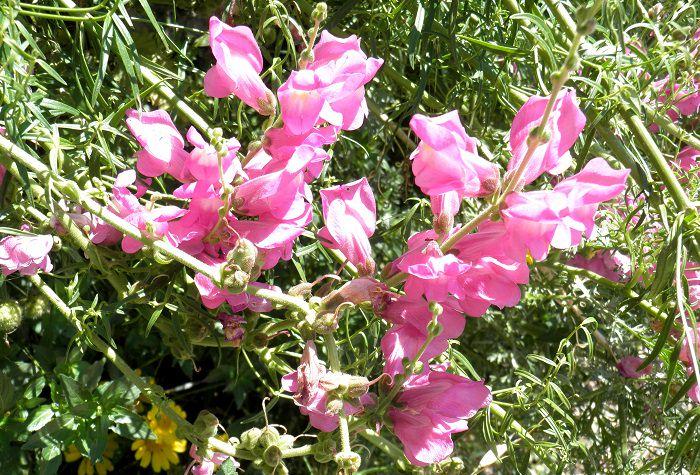 צמחים לחורף