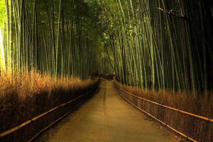 יערות