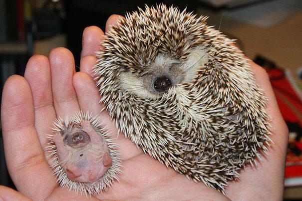 בעלי חיים קטנים