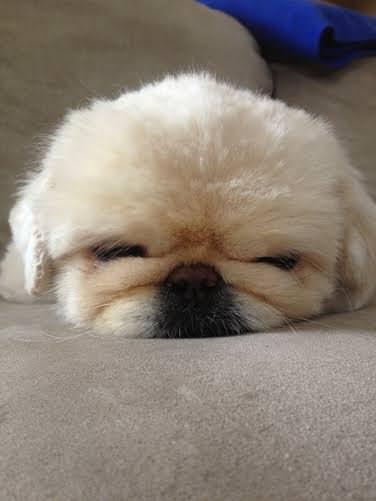 חיות המחמד החמודות ביותר בעולם