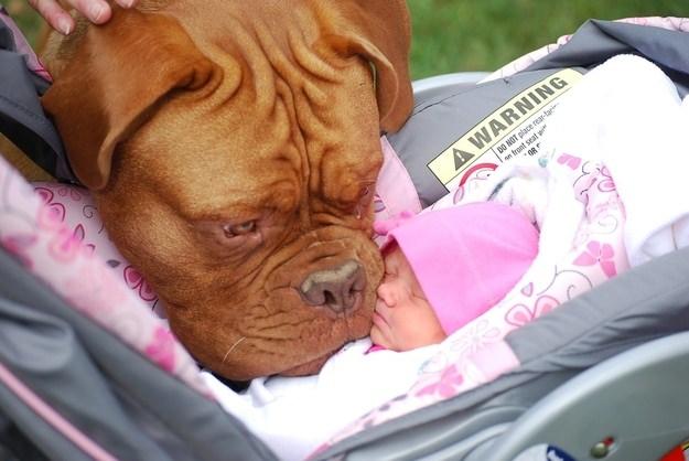 כלבים ותינוקות נפגשיםלראשונה