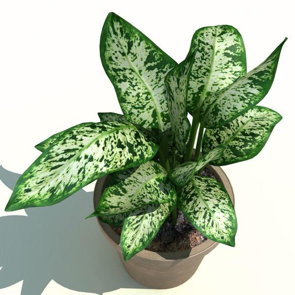 צמח רעיל, דיפנבכיה, ילדים, מסוכן