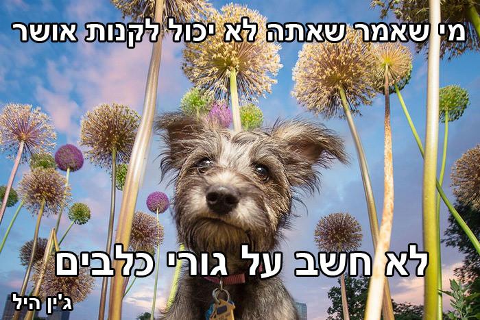 ציטוטי כלבים