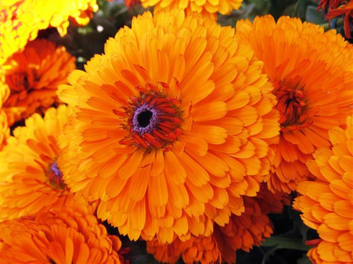 פרחים אכילים