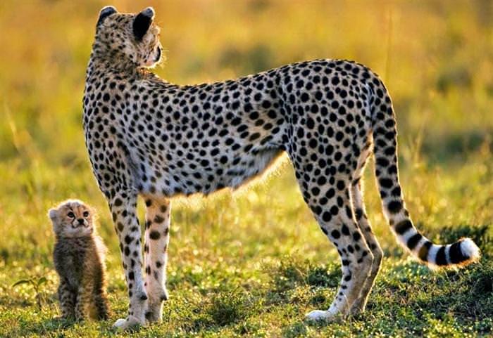 תמונות חיות מדהימות
