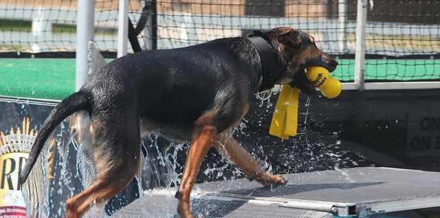 כלבים בשמש