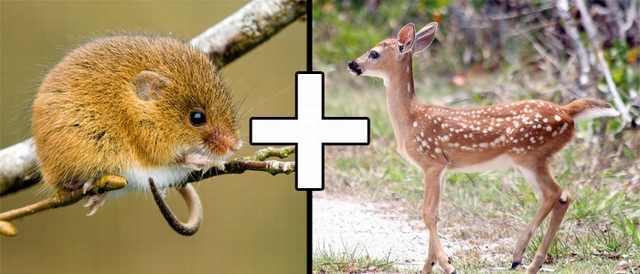 חיות משולבות