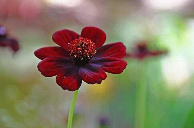 פרחים ריחניים