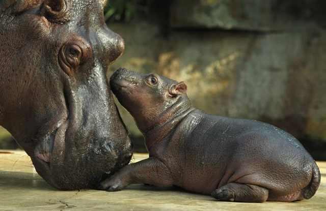 חיות הורים וילדים