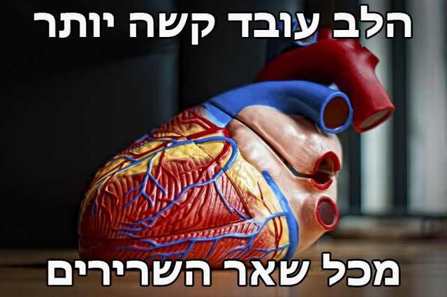 עובדות לב