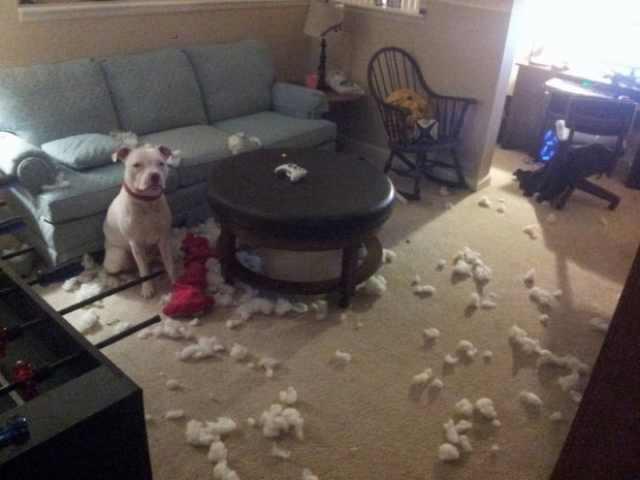 'אני לא יודע מי עשה את זה!' תמונות חובה לכל מי שאוהב כלבים