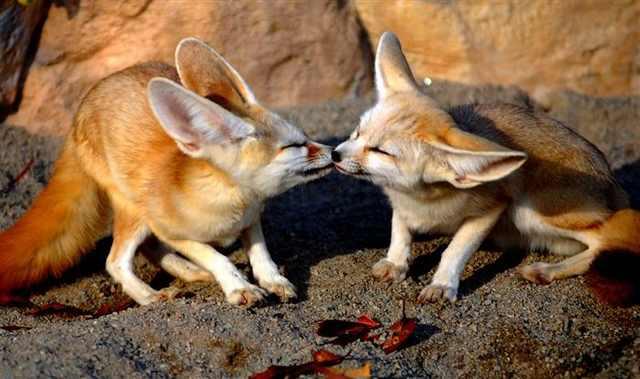 אהבה בנשיקה