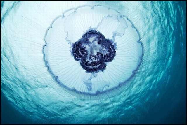 30 תמונות מדהימות מהחיים שמתחת למים