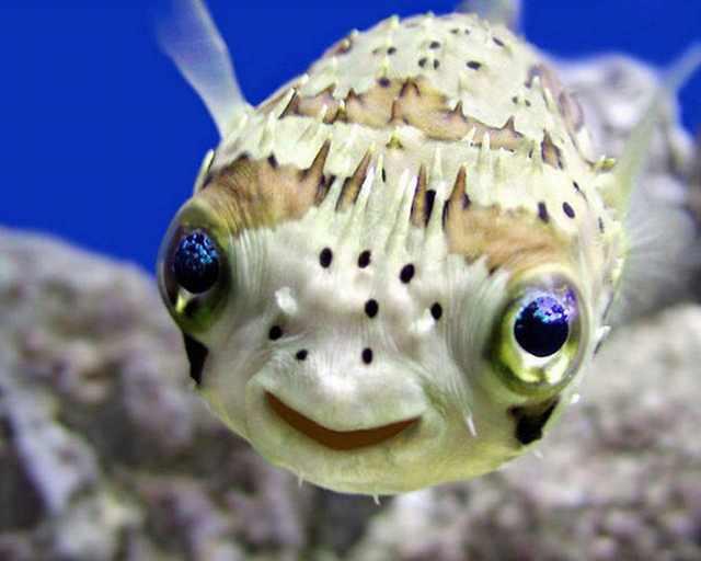 תמונות מקסימות של חיות מביעות אושר בחיוך!