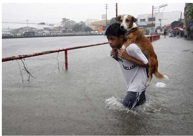 בני אדם רגילים מרחבי העולם במעשים הרואיים למען בעלי החיים