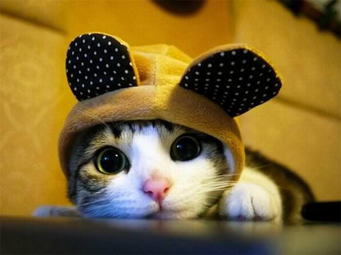 חתולים וכובעים