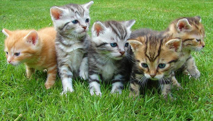 תוצאת תמונה עבור חתול