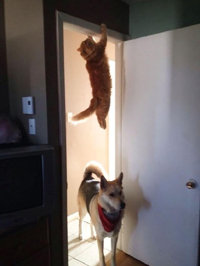 חתולים משחקים מחבואים