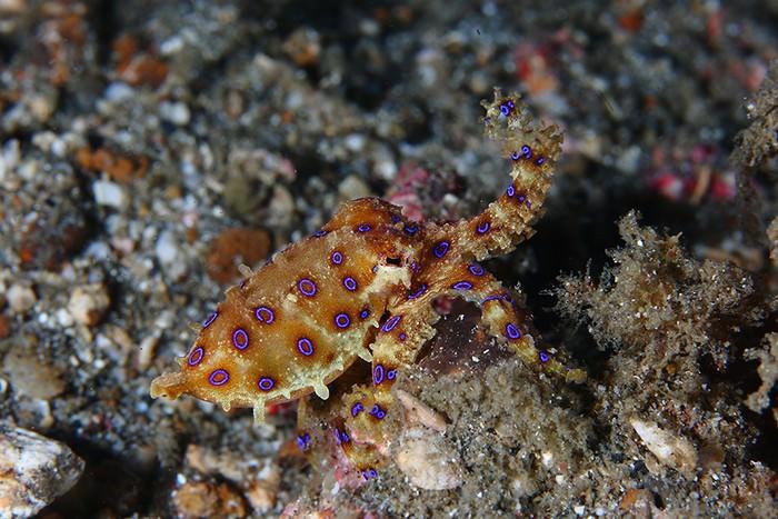 יצורים ימיים מדהימים