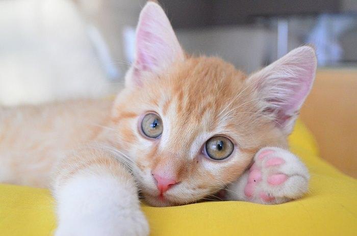 טיפול בחתולים