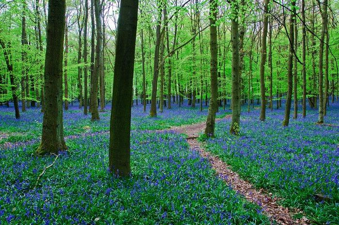 כחול בטבע