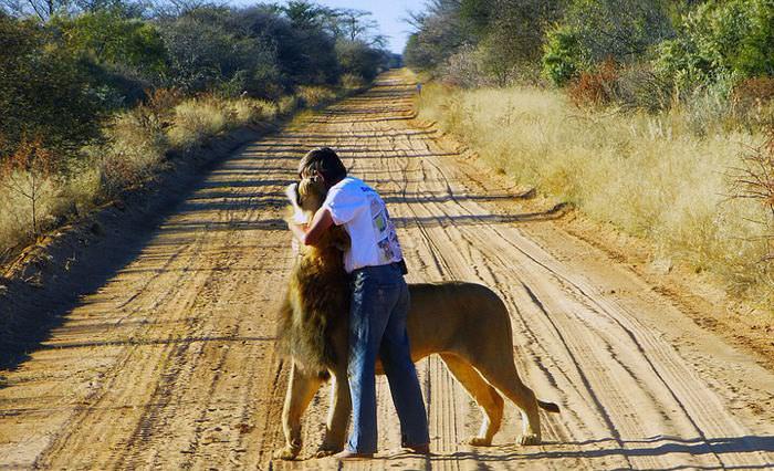 סיפורו של ציון האריה